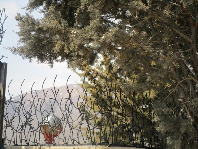 حفاظ شاخ گوزنی در باغ