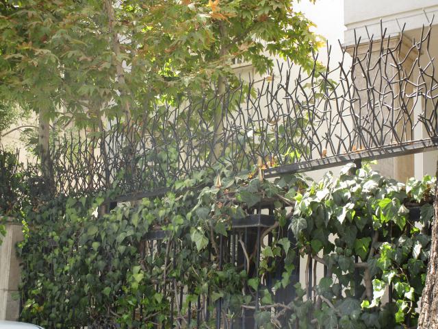 حفاظ شاخ گوزنی در محوطه
