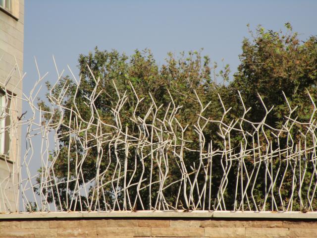 حفاظ شاخ گوزنی سفید برای باغ