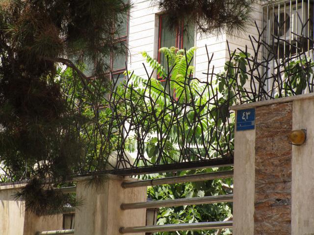حفاظ شاخ گوزنی با رنگ کوه ای